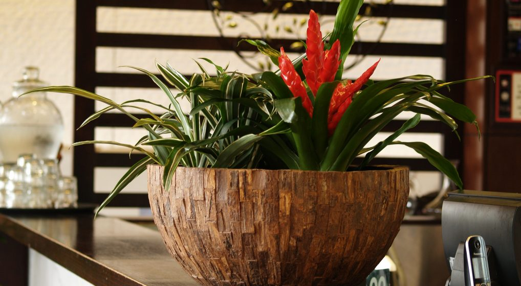 CHOOSING PLANTER POTS FOR OFFICES
