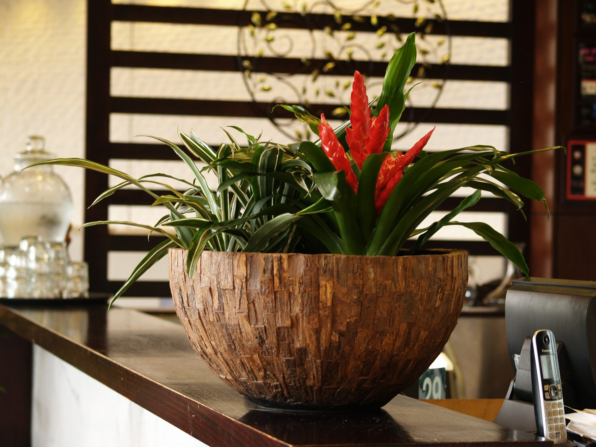 Indoor Plant Hire, Office Plant hire, Office plants, green design indoor plant hire, bromeliad, java range, java bowl