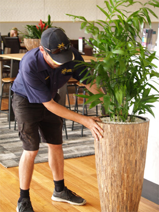 BUYING PLANTS Vs PROFESSIONAL PLANT HIRE SERVICE