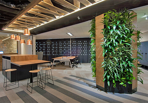 YOU NEED OFFICE PLANTS NOW MORE THAN EVER