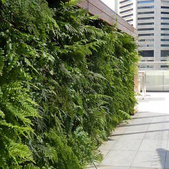 OUTDOORS GREEN WALL AT FACEBOOK