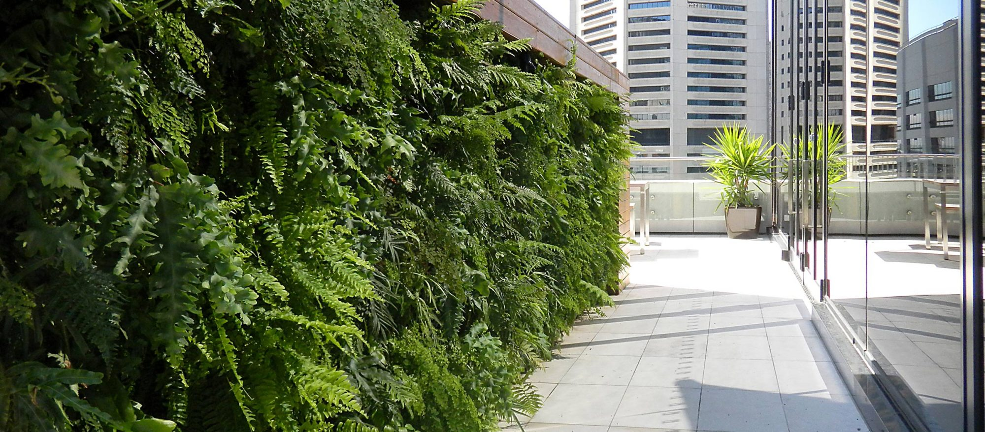 OUTDOORS GREEN WALL AT FACEBOOK