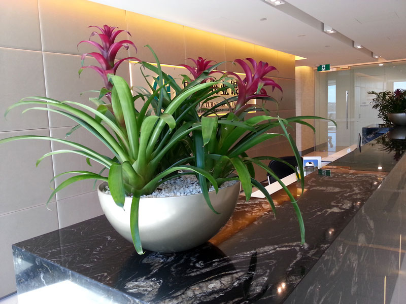 Indoor Plant Hire Bromeliad Desk Garden