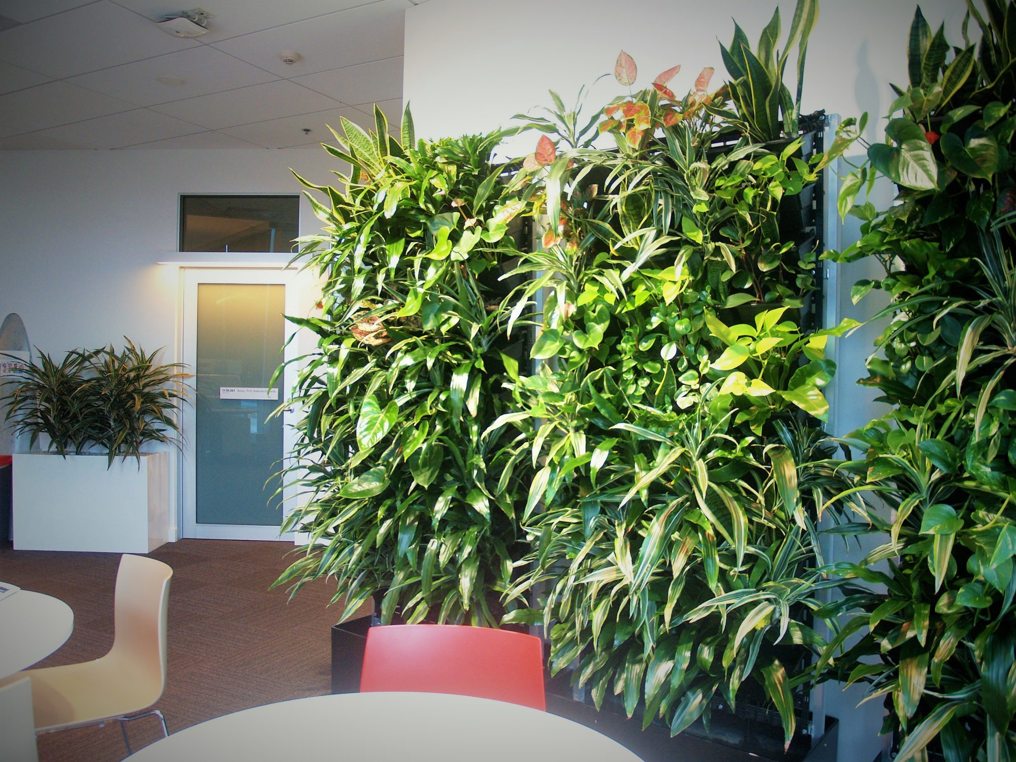 Green Walls, Vertical Garden, Green Design Indoor Plant Hire, Office Plant hire