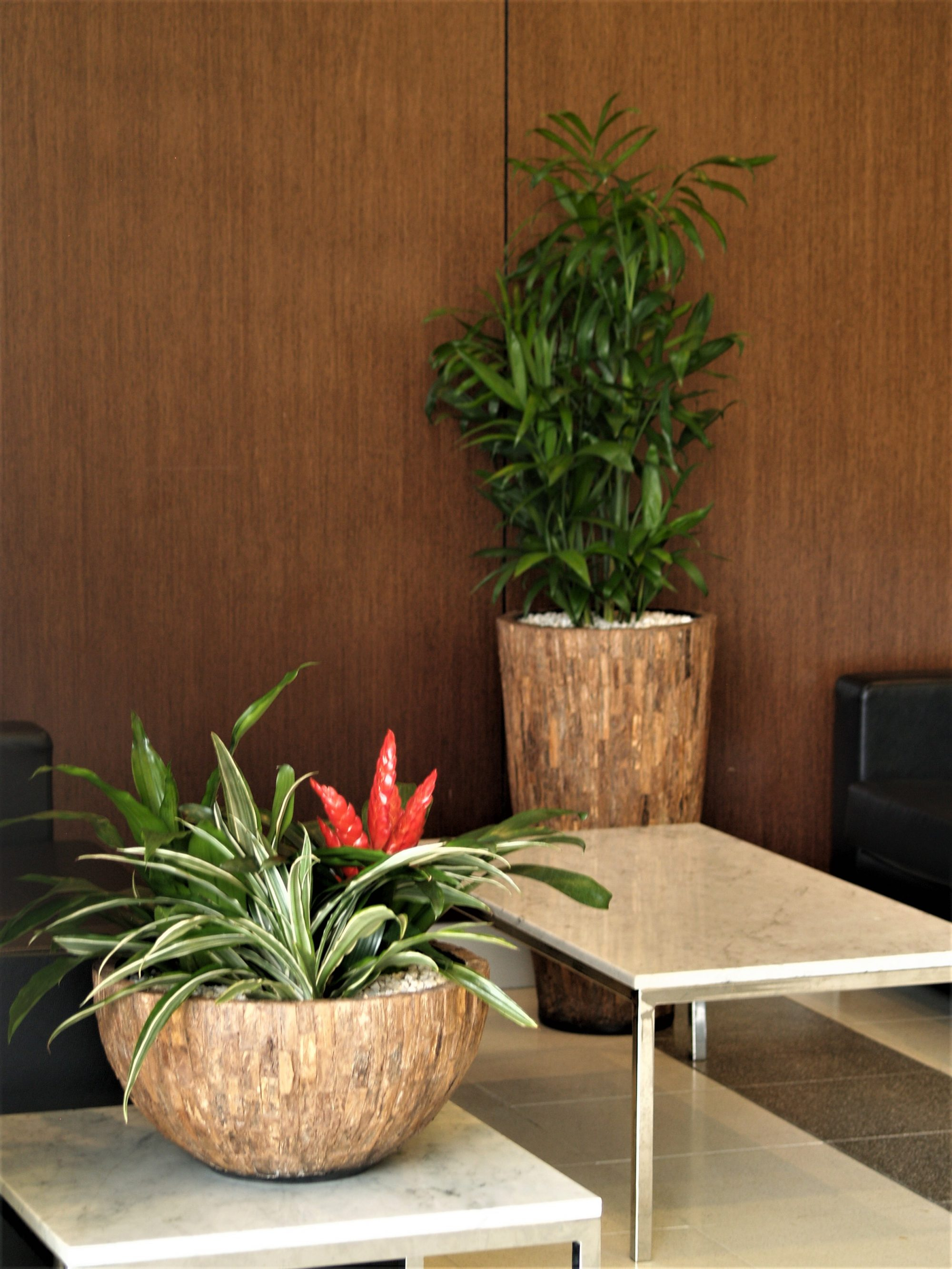 indoor plant hire, office plant hire, green design indoor plant hire, office planters, office plants, indoor planters, modern planters
