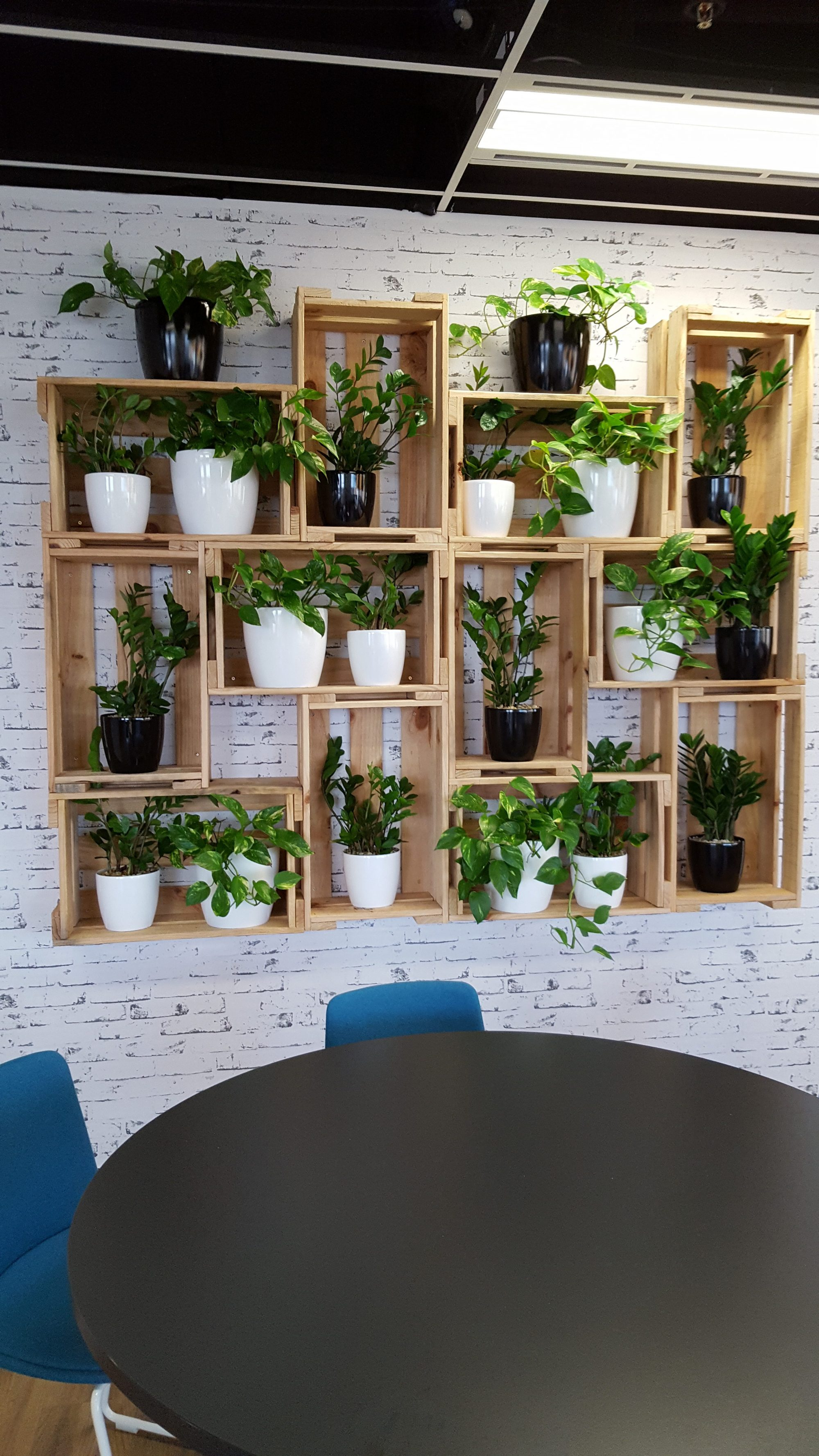 Pothos, Ivy, Green Design Indoor Plant Hire, Indoor Plant Hire, Office Plants, Office Plant Hire, biophilia