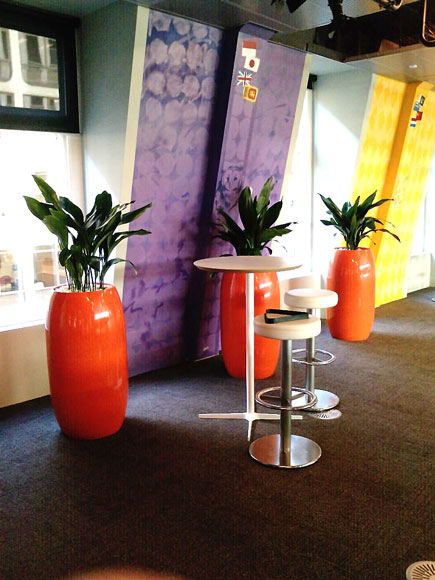 Aspidistra, Indoor Plant Hire, Office Plant Hire, Green Design Indoor Plant Hire, Office Plants
