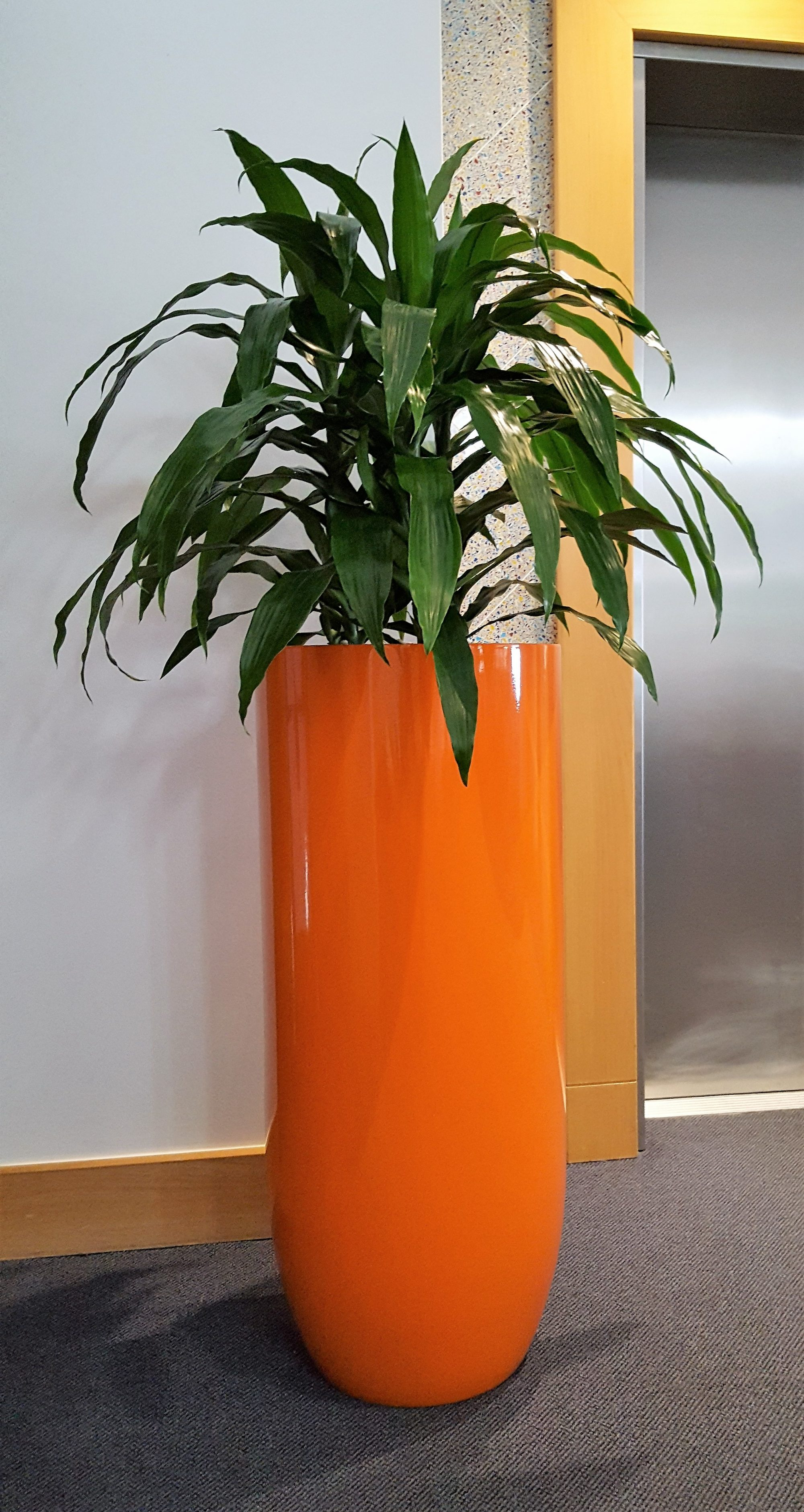 Indoor Plant Hire, Office Plant Hire
