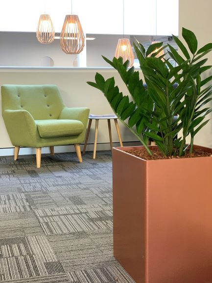 indoor plant hire, office plant hire, office plants, plant hire, green design indoor plant hire, custom planter hire,