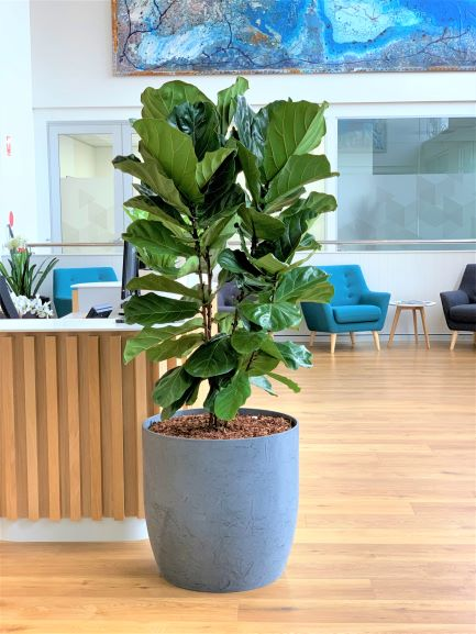 indoor plant hire., office plant hire, office plant, plant hire, custom planters, bespoke plant hire,