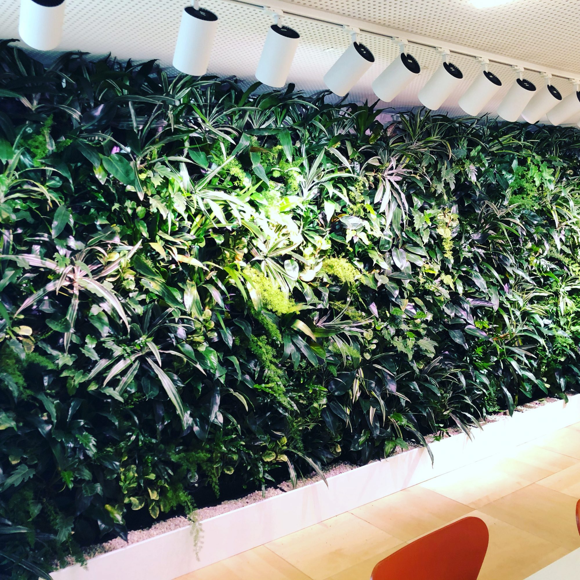VERTICAL GARDENS…NOW EVERYONE CAN HAVE ONE: PART TWO