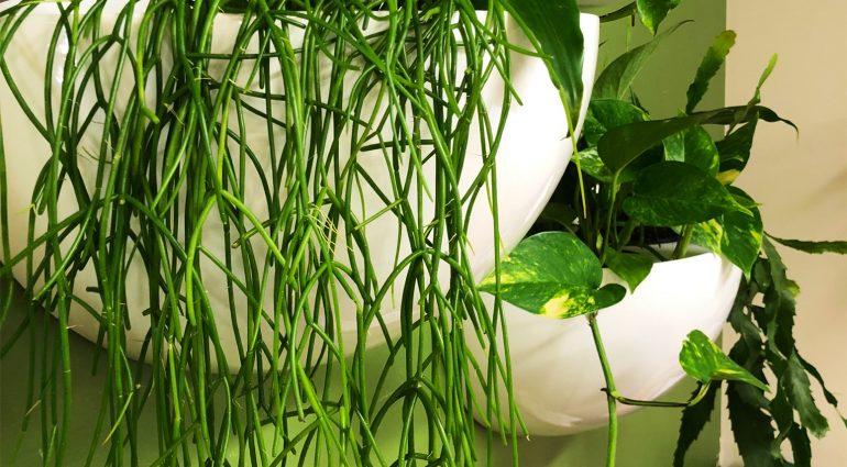 OFFICE PLANTS: BUYING Vs HIRING