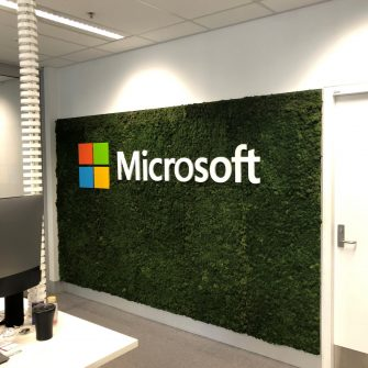 Reindeer Moss at Microsoft Sydney Uni