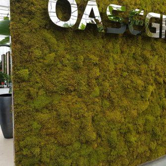 Plat Moss at Europe Moss Supplier