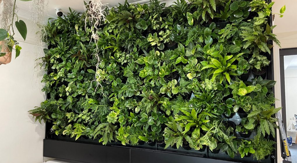 HOW MUCH WILL MY INDOOR GREEN WALL REALLY COST?