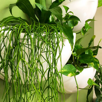 Bespoke Living Wall Systems